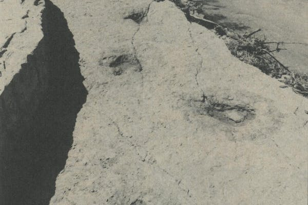 The alleged human footprints (foreground) and dinosaur tracks.