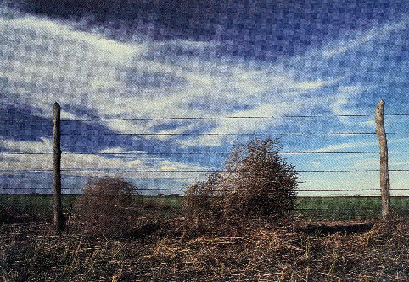 A High Plains tumbleweed.