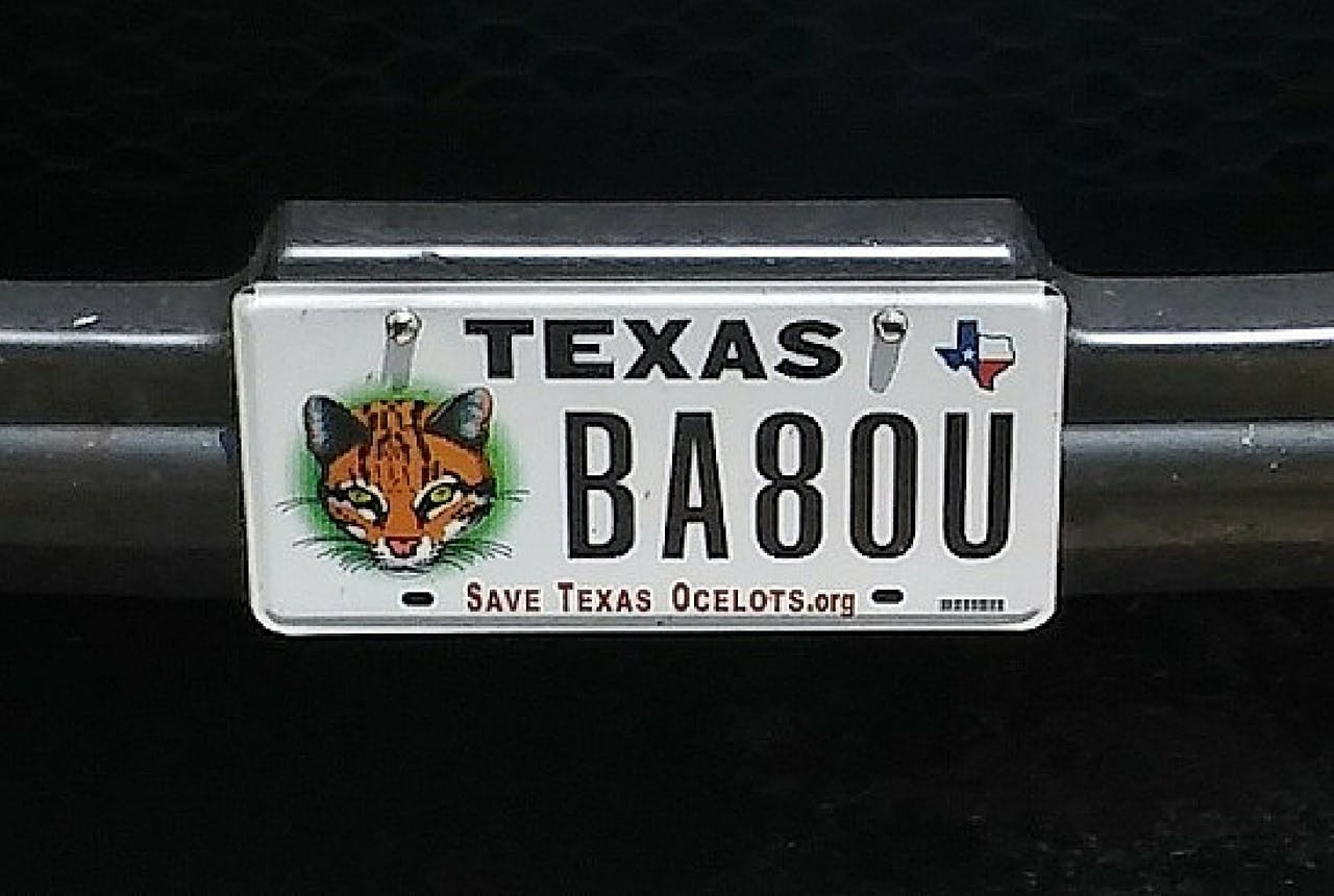 Texas ocelots license plate gift guide