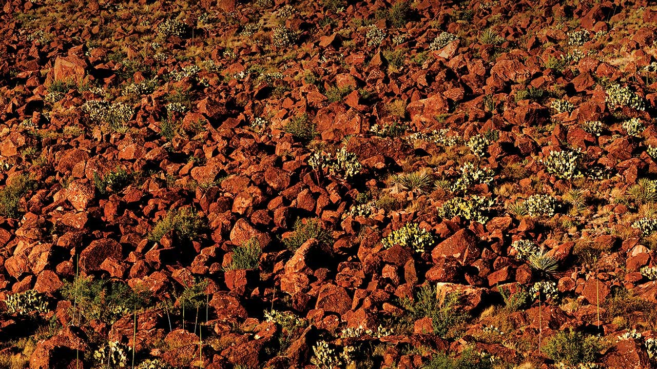 Abundant growth near the rock at Big Hill, in Lajitas.
