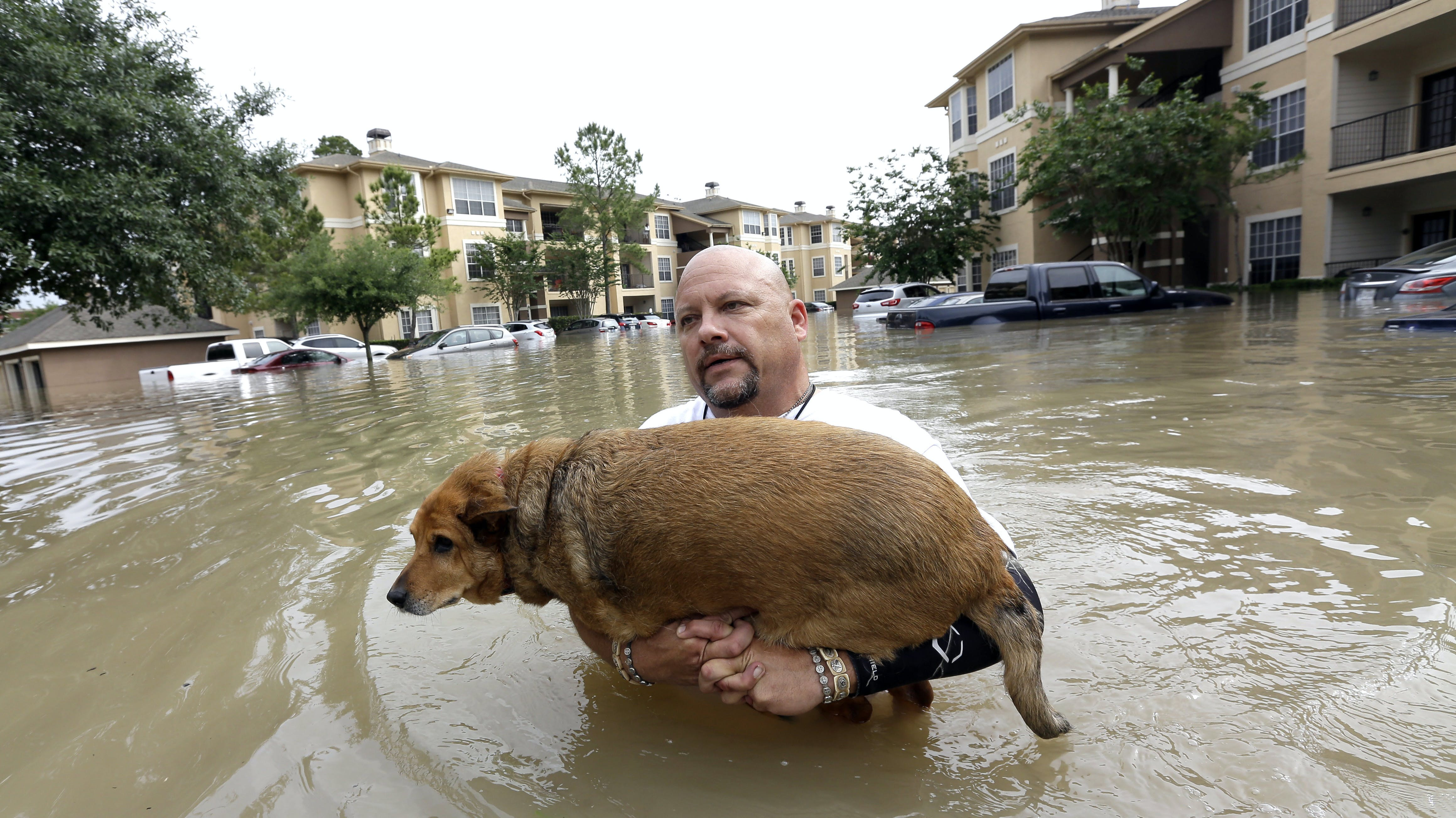 Louis Marquez carries his dog Chocolate through floodwaters after rescuing the dog from his flooded apartment Tuesday, April 19, 2016, in Houston. Storms have dumped more than a foot of rain in the Houston area, flooding dozens of neighborhoods.