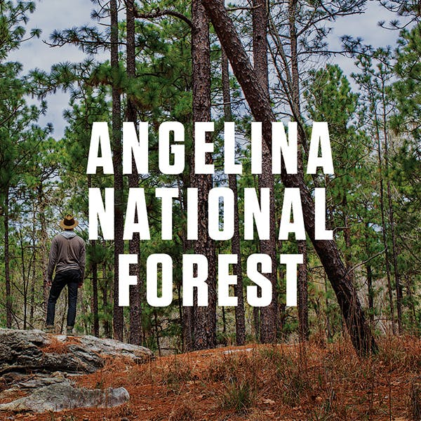 AngelinaNationalForest_Texas