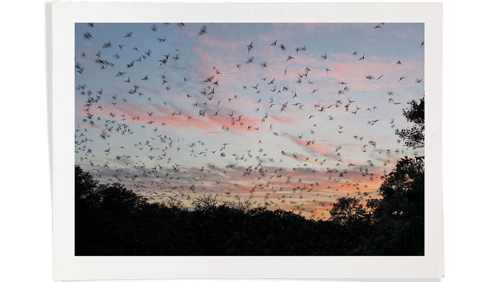 feature-migration-bats-devils-sinkhole-state-bat-tornado