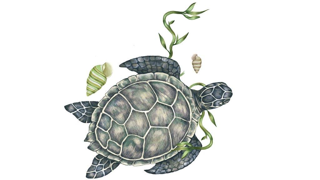 feature-migration-kemps-ridley-sea-turtle-dan-oko-lisel-ashlock-illustration