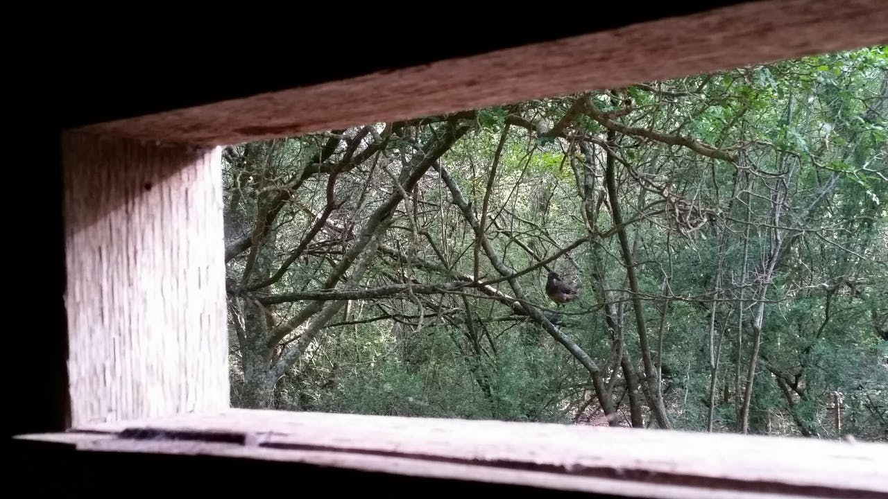 A chachalaca spied from a viewing blind at the Inn at Chachalaca Bend, in Los Fresnos.