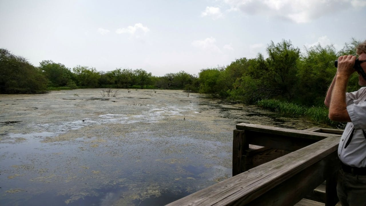 San Benito–based birding guide Michael Marsden looks out over Gator Pond at Laguna Atascosa Wildlife Refuge.