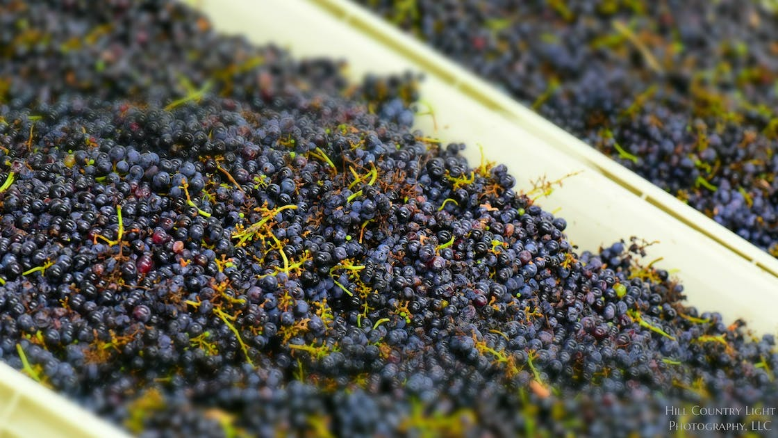 top texas wines fall 2016