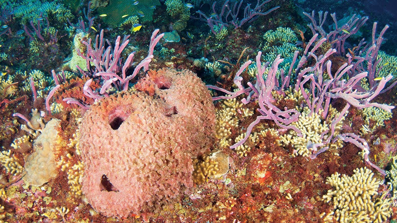 Healthy corals and sponges at the Flower Garden Banks in October 2012.