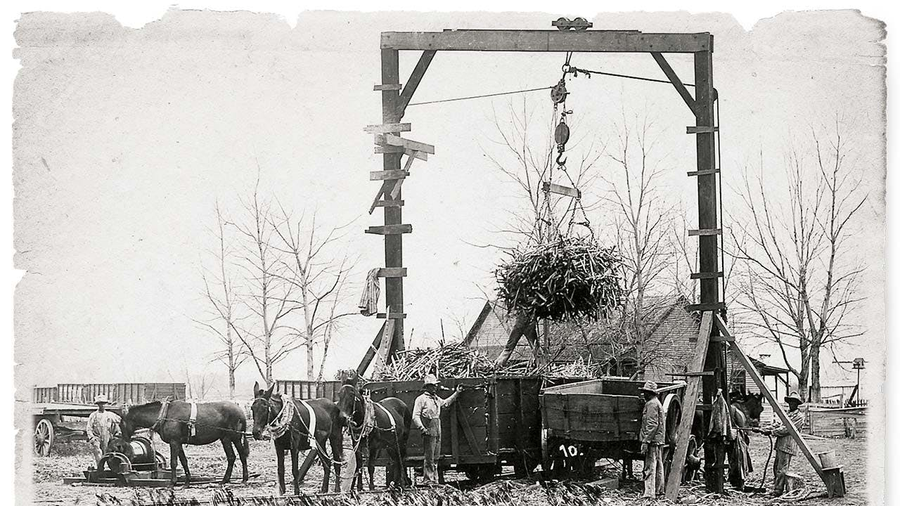 Convicts unloading a cane car at the Imperial Sugar Company's mill sometime around 1900.