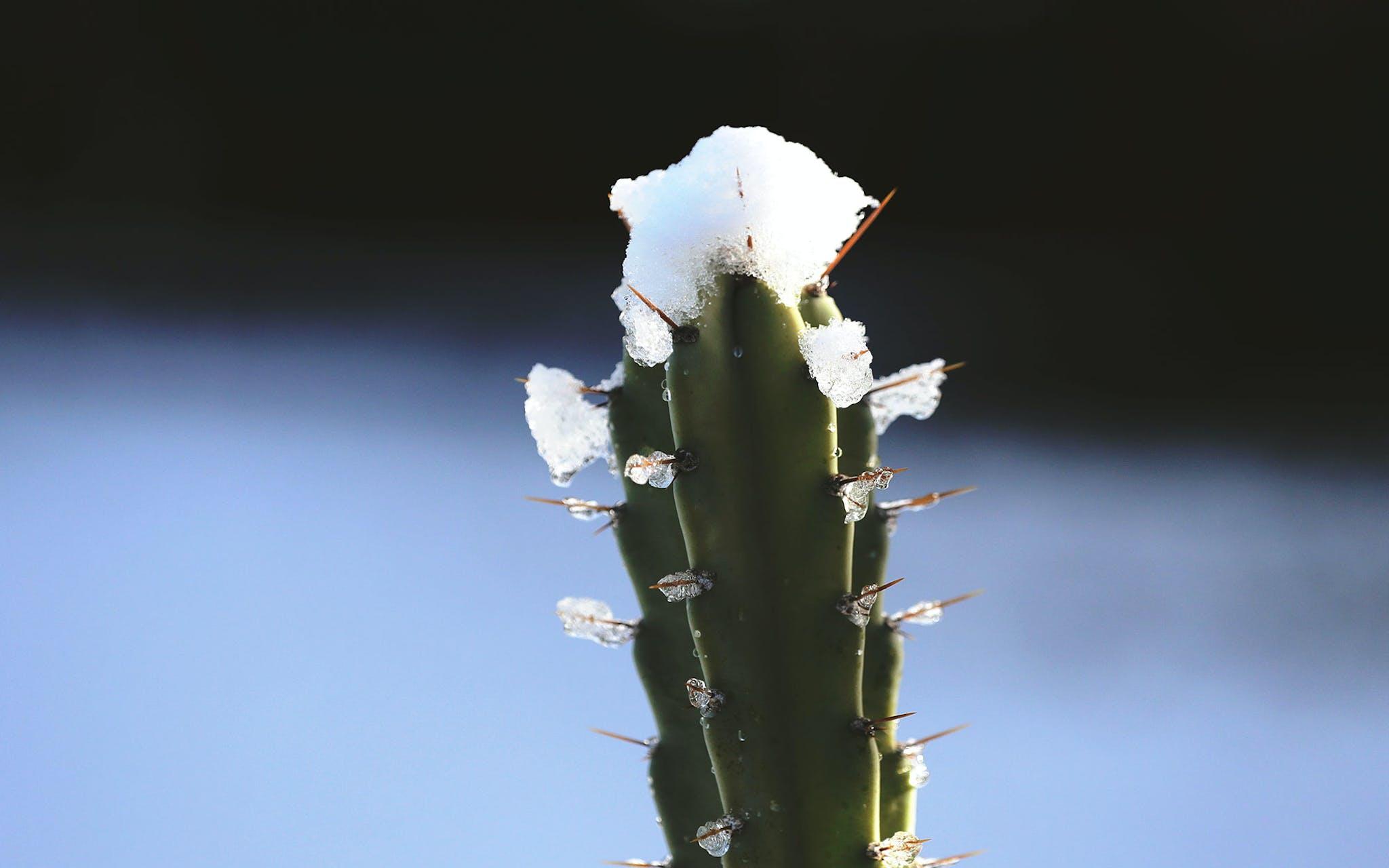 Snow on Cactus Texas