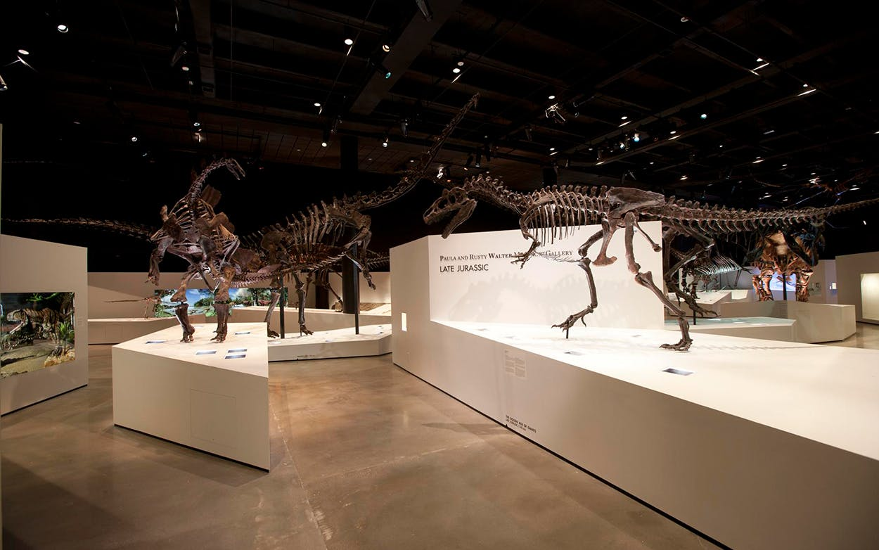 The Morian Hall of Paleontology at the Houston Museum of Natural Science.