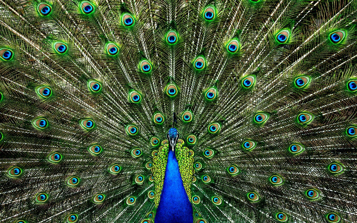 Peacock Amazon Superbowl Ad