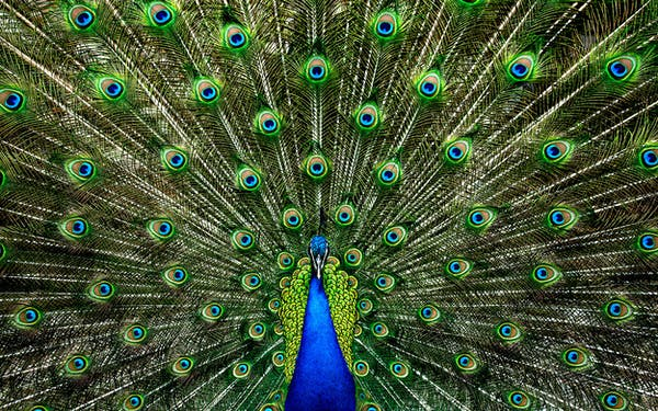 Peacock Amazon Superbowl Ad