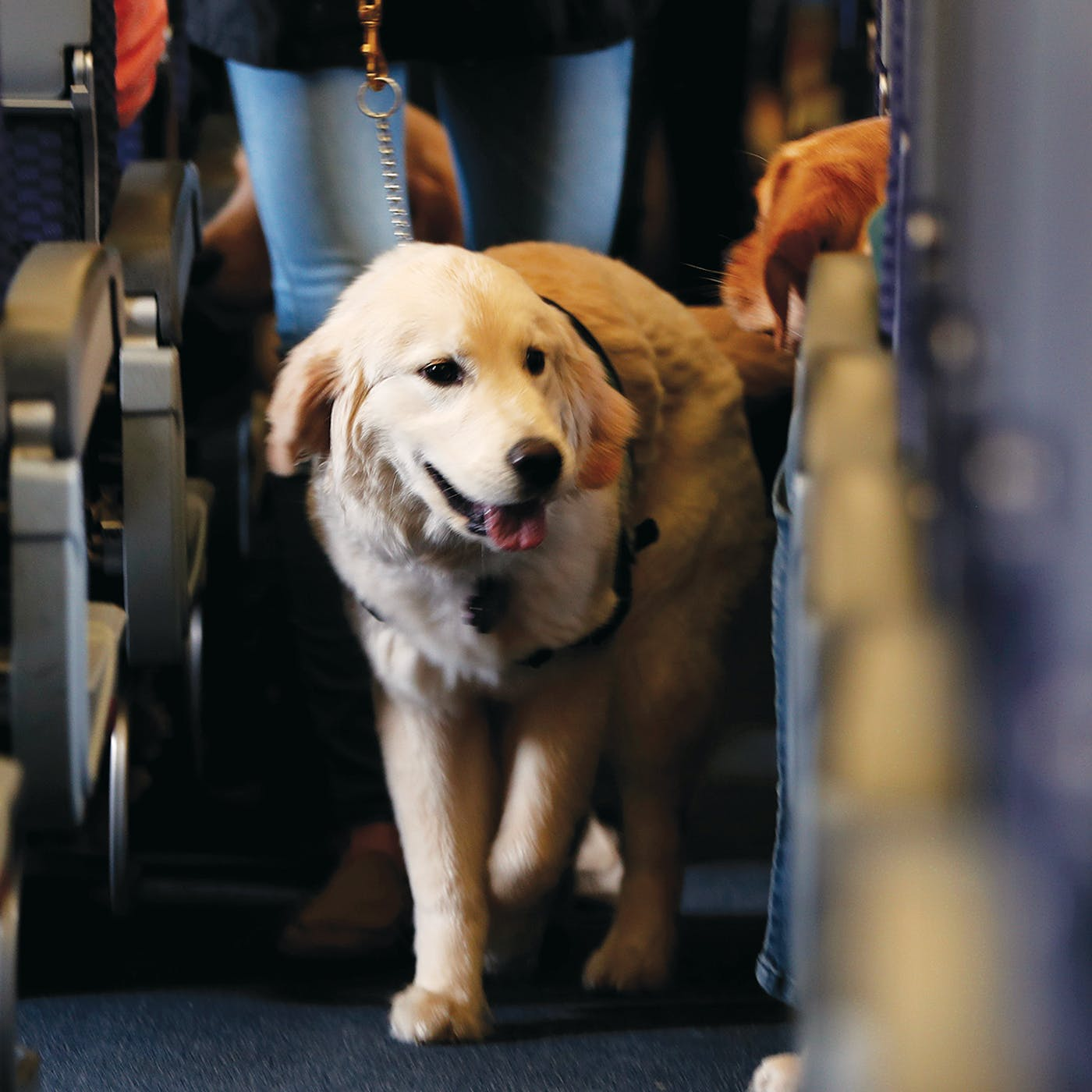 Why There Are So Many More Animals on Planes Over the ...