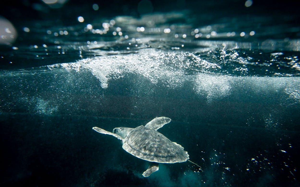 Sea Turtle Cold Weather