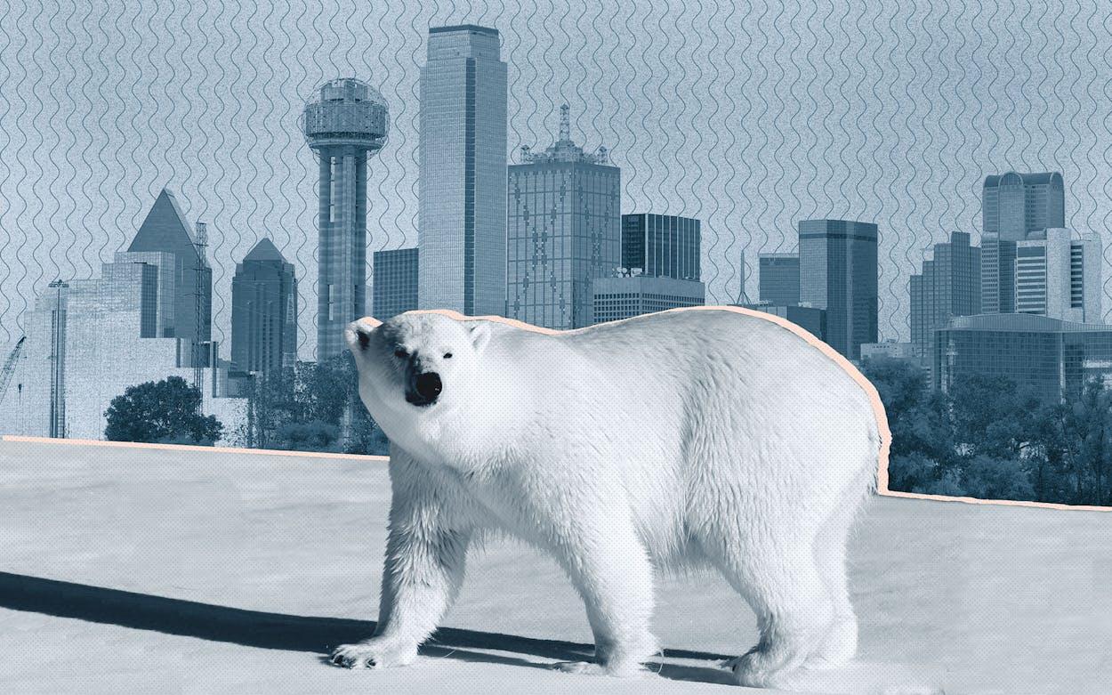 texas cold