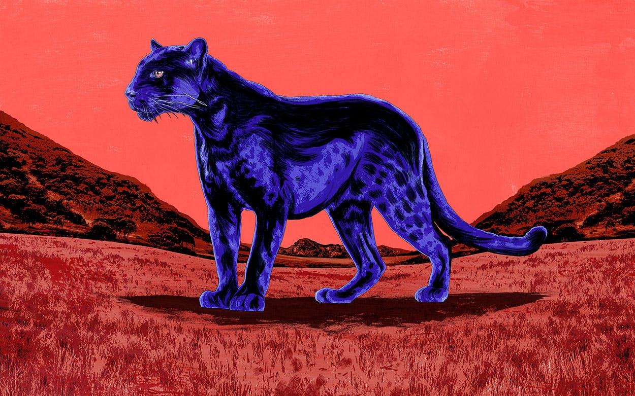 Panther Elizabeth Crook Review