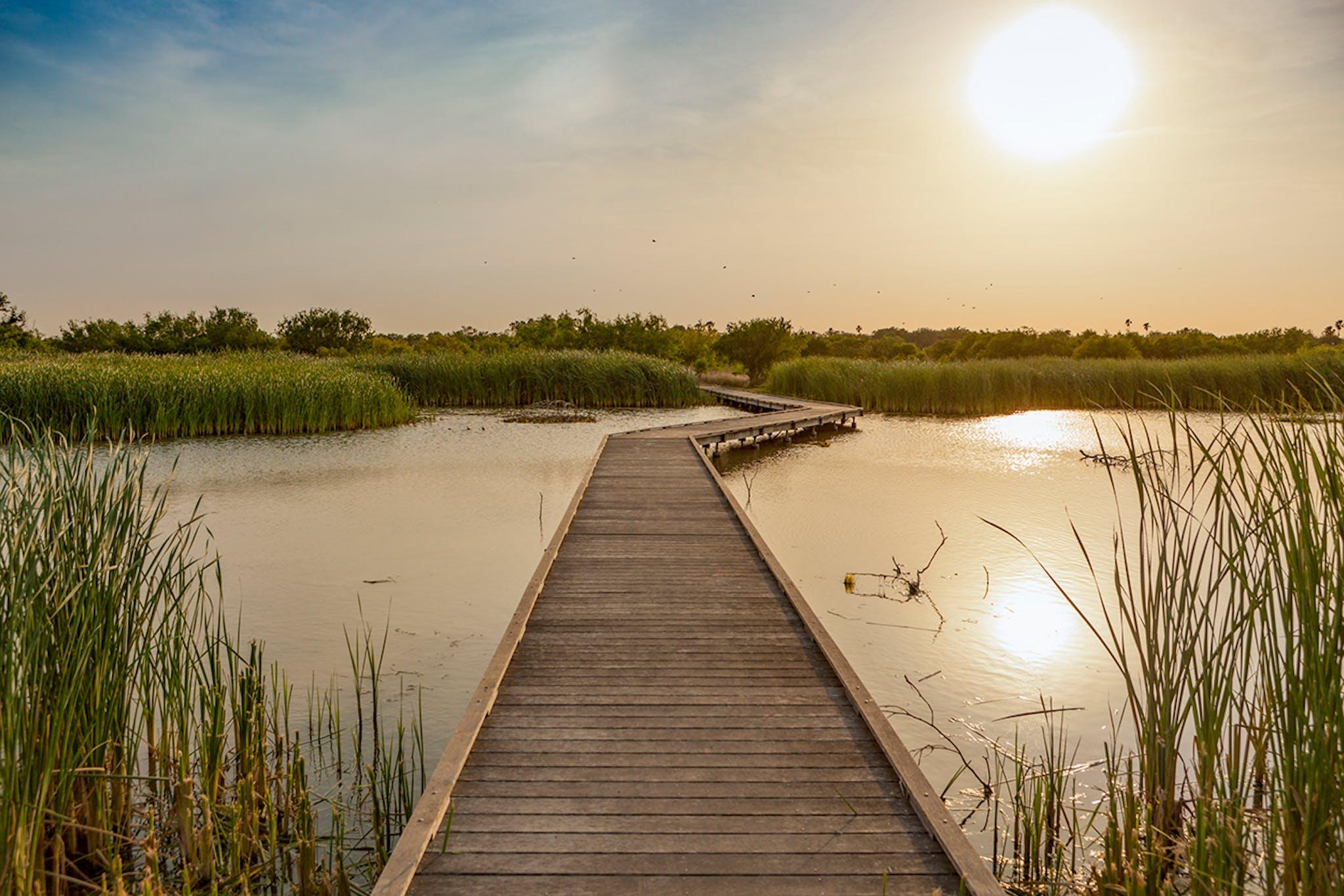 Estero Llano Grande State Park