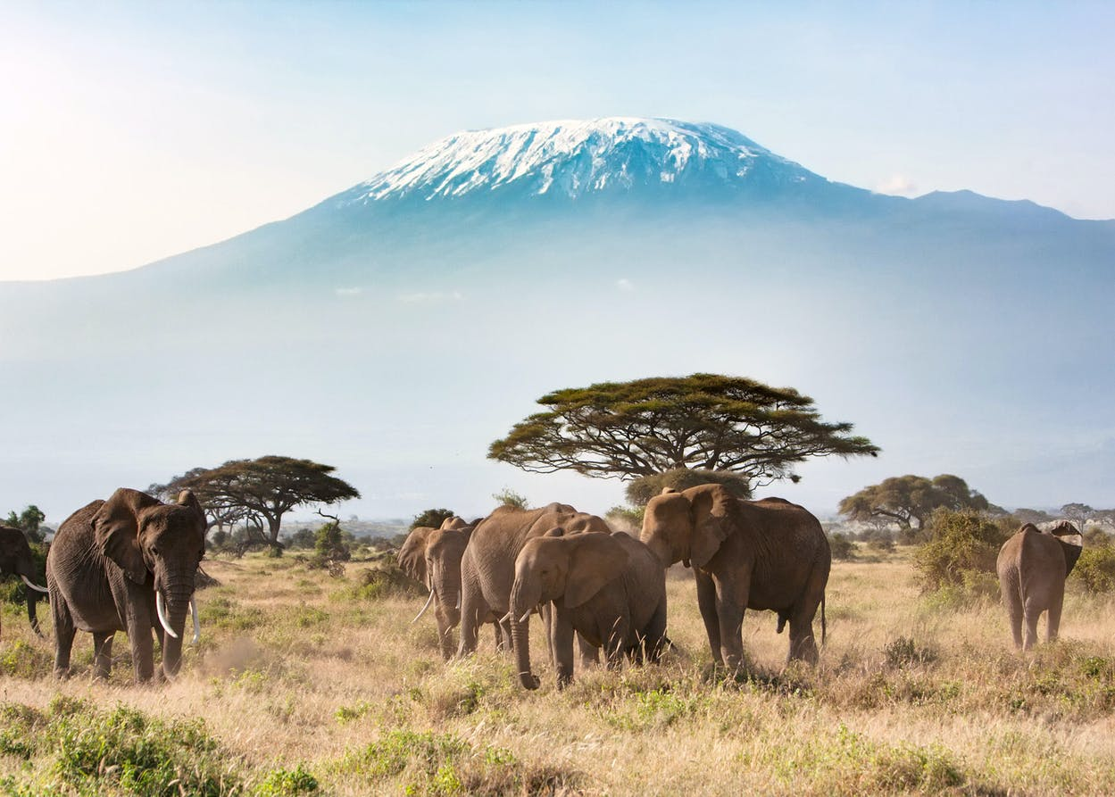 Mount Kilimanjaro, which seven-year-old Austinite Montannah Kenney climbed.