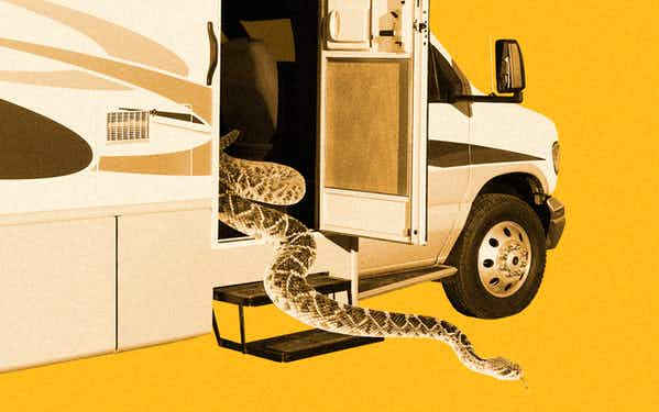 Rattlesnake coming out of an RV