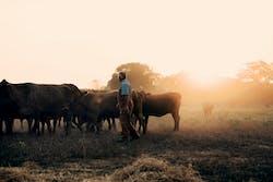 Buck Birdsong Cows