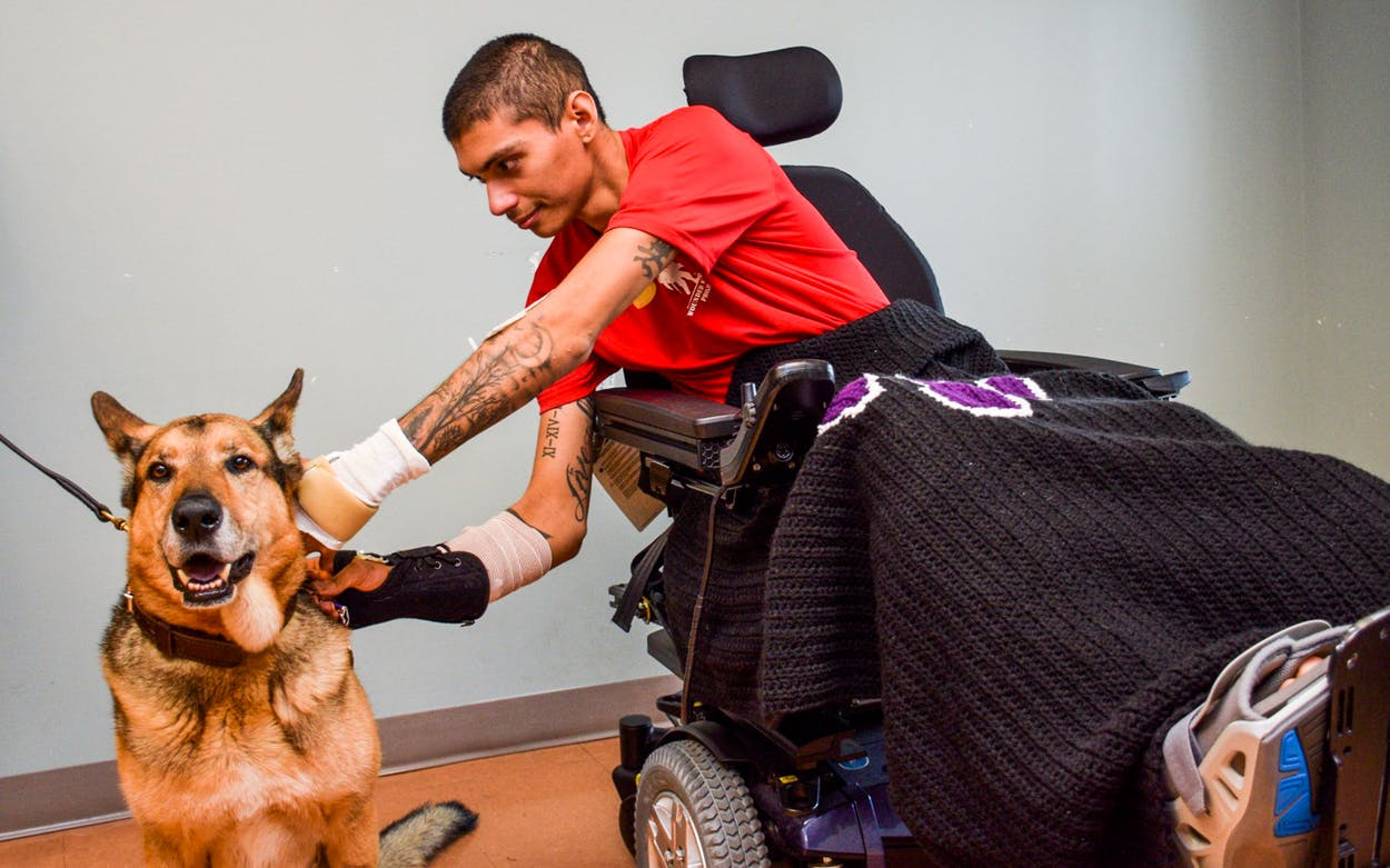 Army Spec. Alec Alcoser pins the Purple Heart on a bomb-sniffer dog named Alex