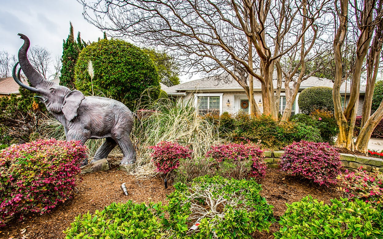 A bronze elephant statue adorns the front yard of a house on Mockingbird Lane in Dallas.