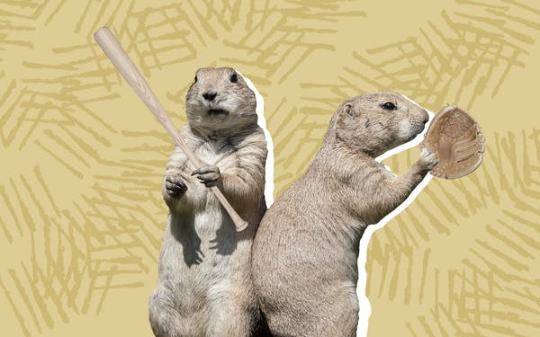 A photo of prairie dogs, also known as sod poodles, holding baseball equipment