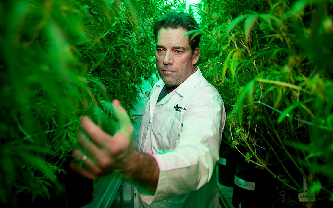 Morris Denton, CEO of Compassionate Cultivation, looks at some of the cannabis plants at the facility in Manchaca on Wednesday Jan. 17, 2018.