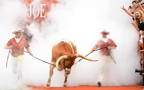 Texas Longhorns mascot Bevo XV leads the team out of the tunnel