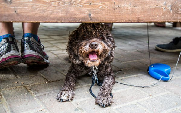 A dog lounging under a patio table at Radio Coffee & Beer in Austin, Texas.