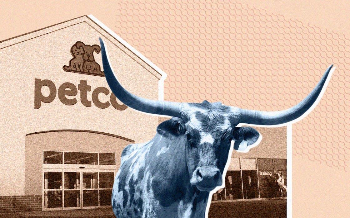 longhorn at Petco
