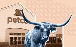 longhorn at Petco