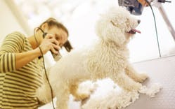 shaving dogs in the summer