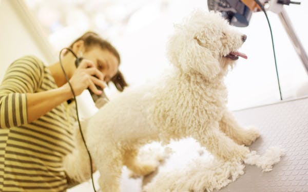 Should You Shave Your Dog In The Summertime Texas Monthly