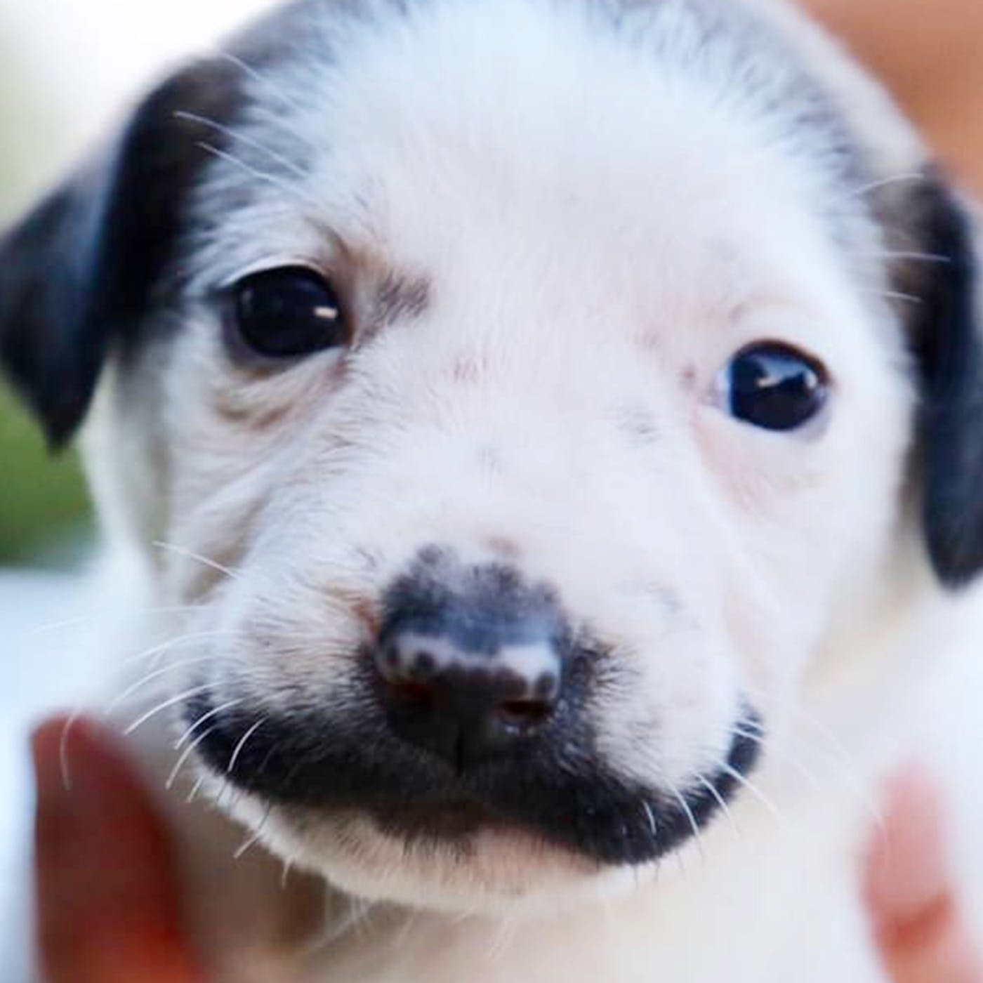 How Old Do You Have To Be To Adopt A Dog In Texas - petfinder