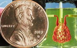Jordan-Miller-3D-printing-organs-penny