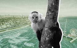 lost-monkey-galveston