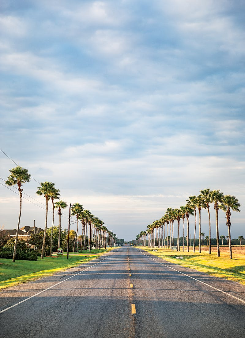 palm-trees-at-bentsen-rio-grande-valley-state-park