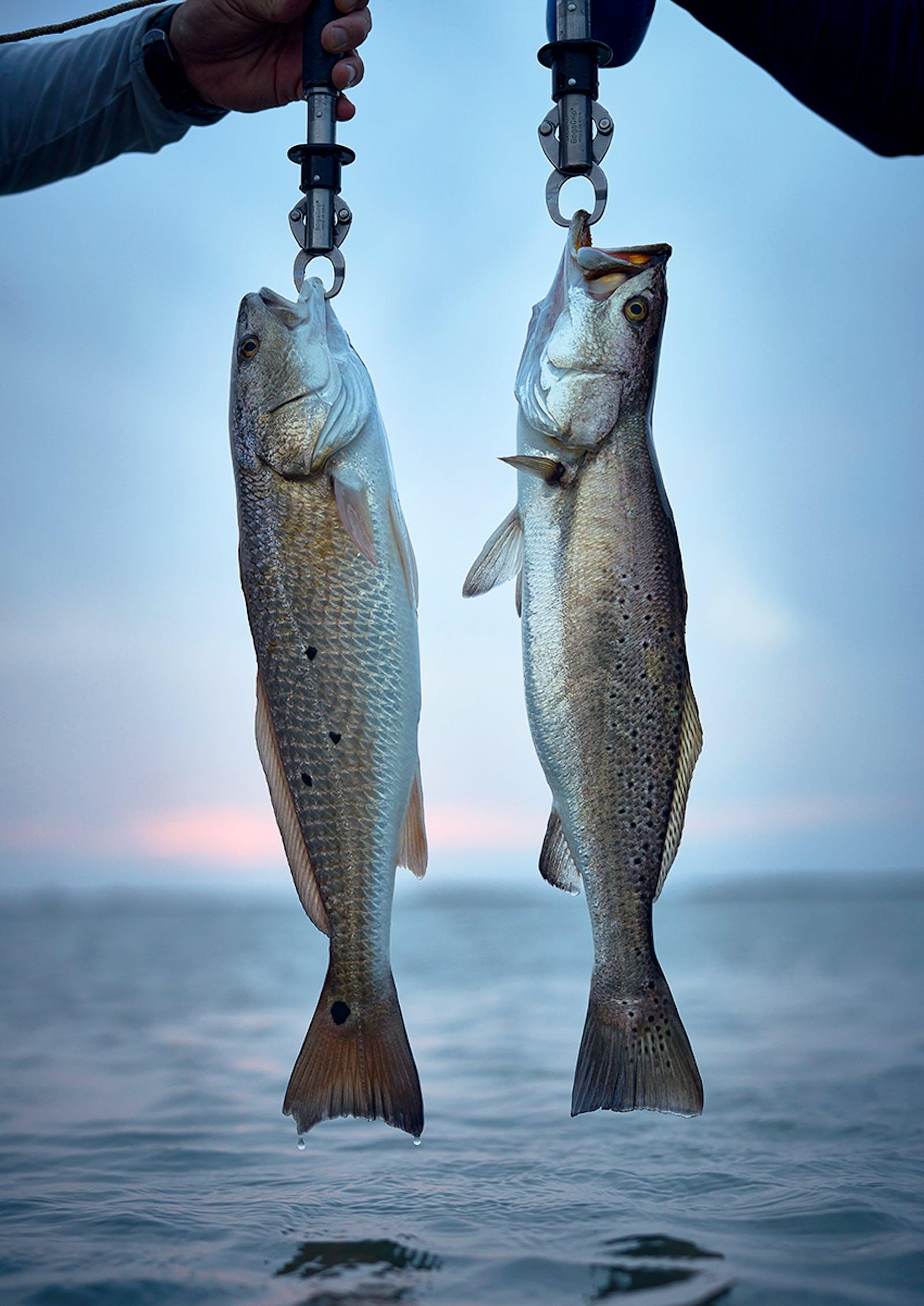 Two redfish caught near Port Aransas.