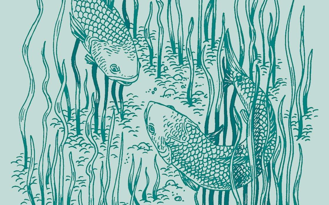 fishing redfish wars