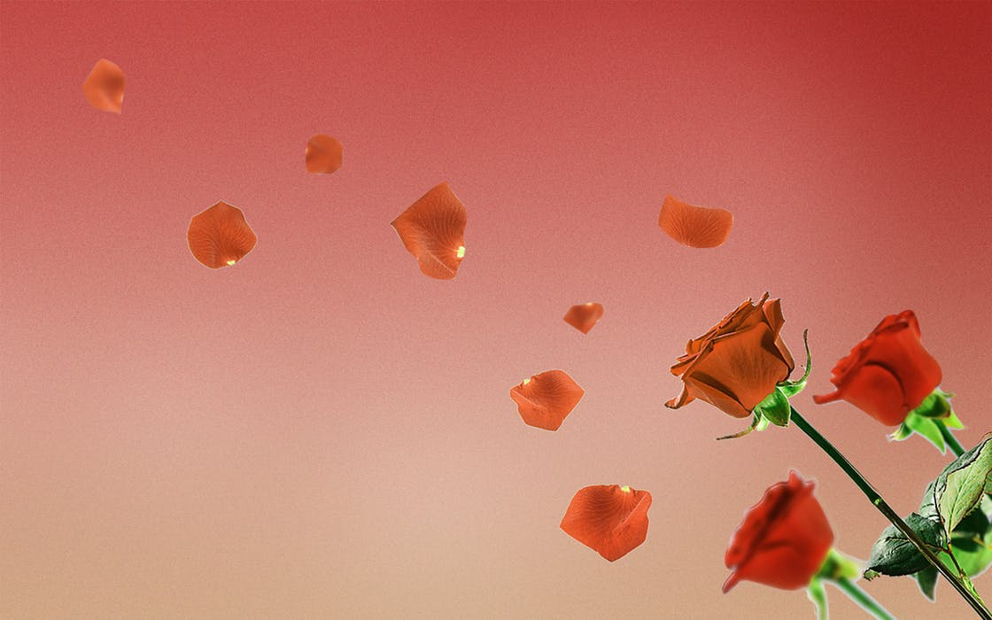 roses blowing in the wind