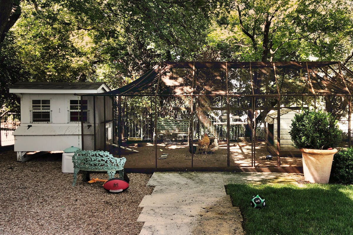 backyard coop