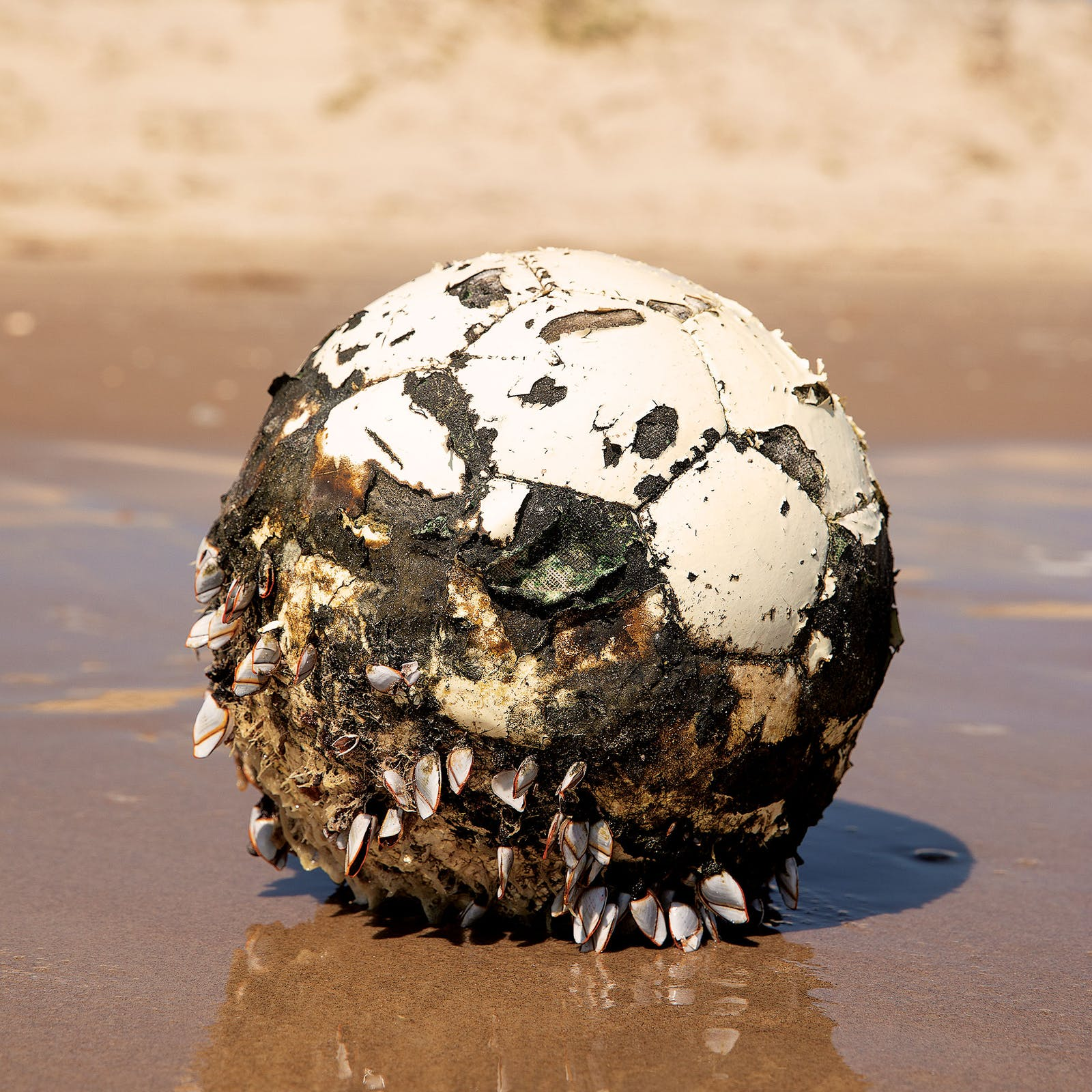 A mussel-encrusted soccer ball near mile marker 42.