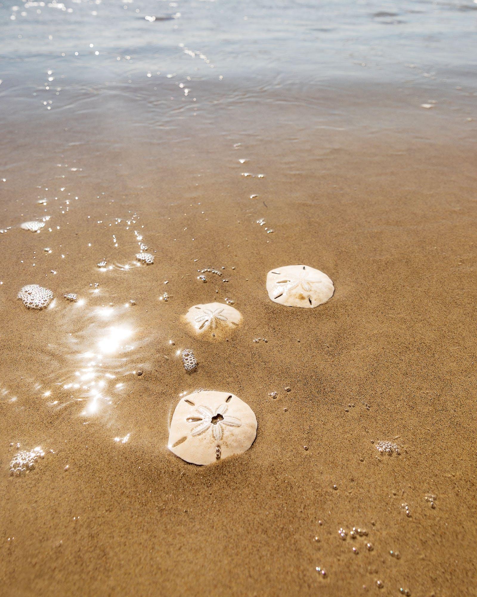 Sand dollars on the Padre Island National Seashore