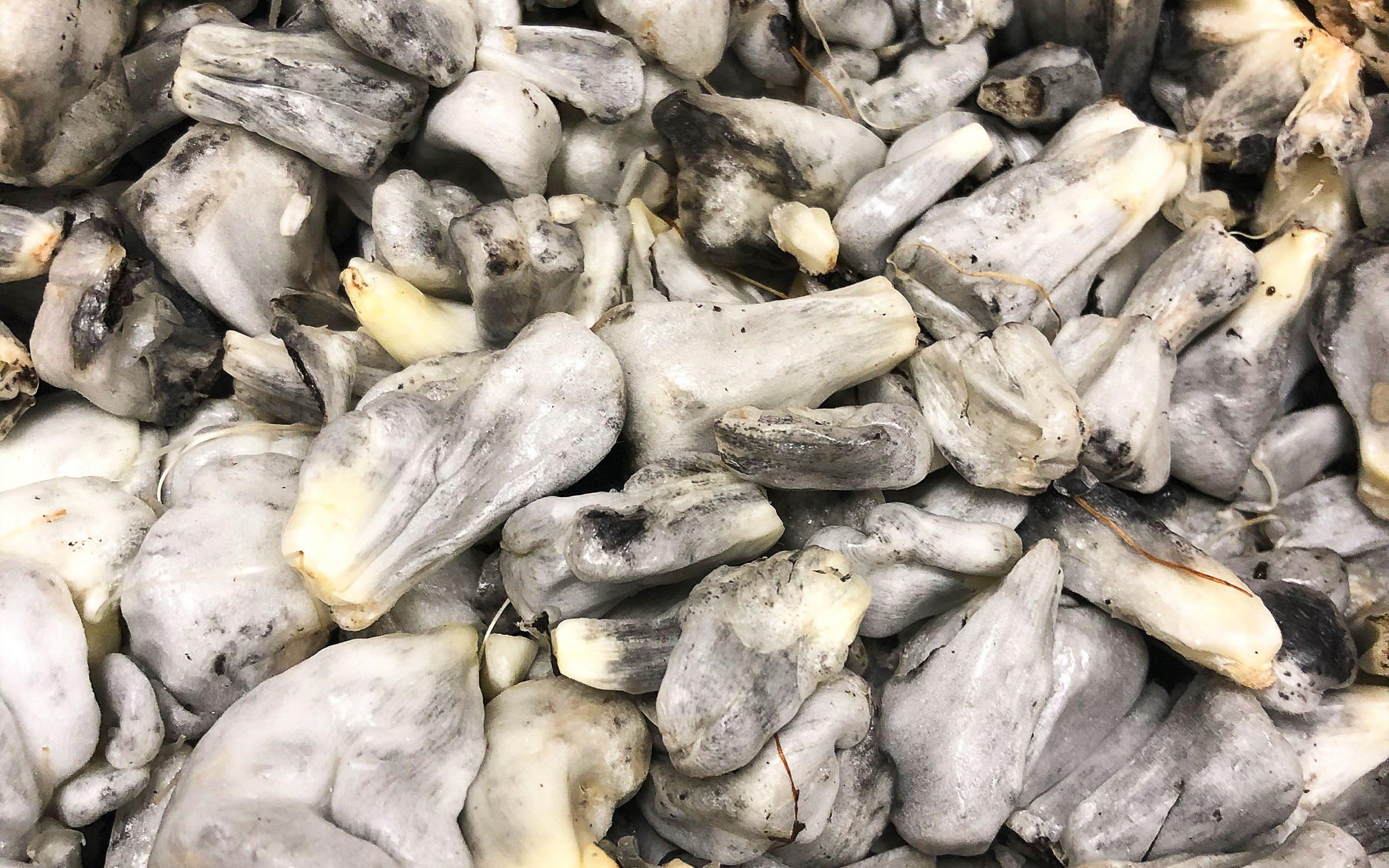 texas-mex-food-texas-huitlacoche-explainer-2