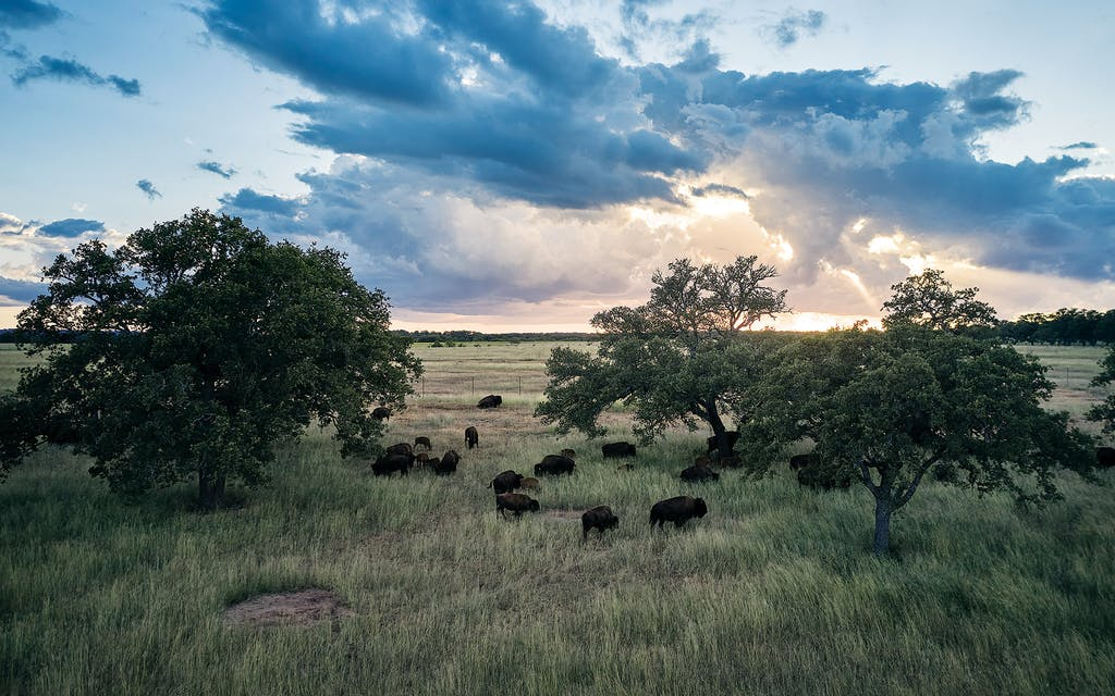 bison roam ranch