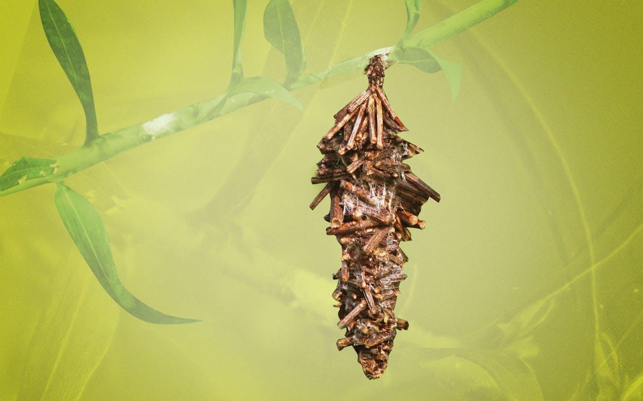 TM-reccommends-bagworm