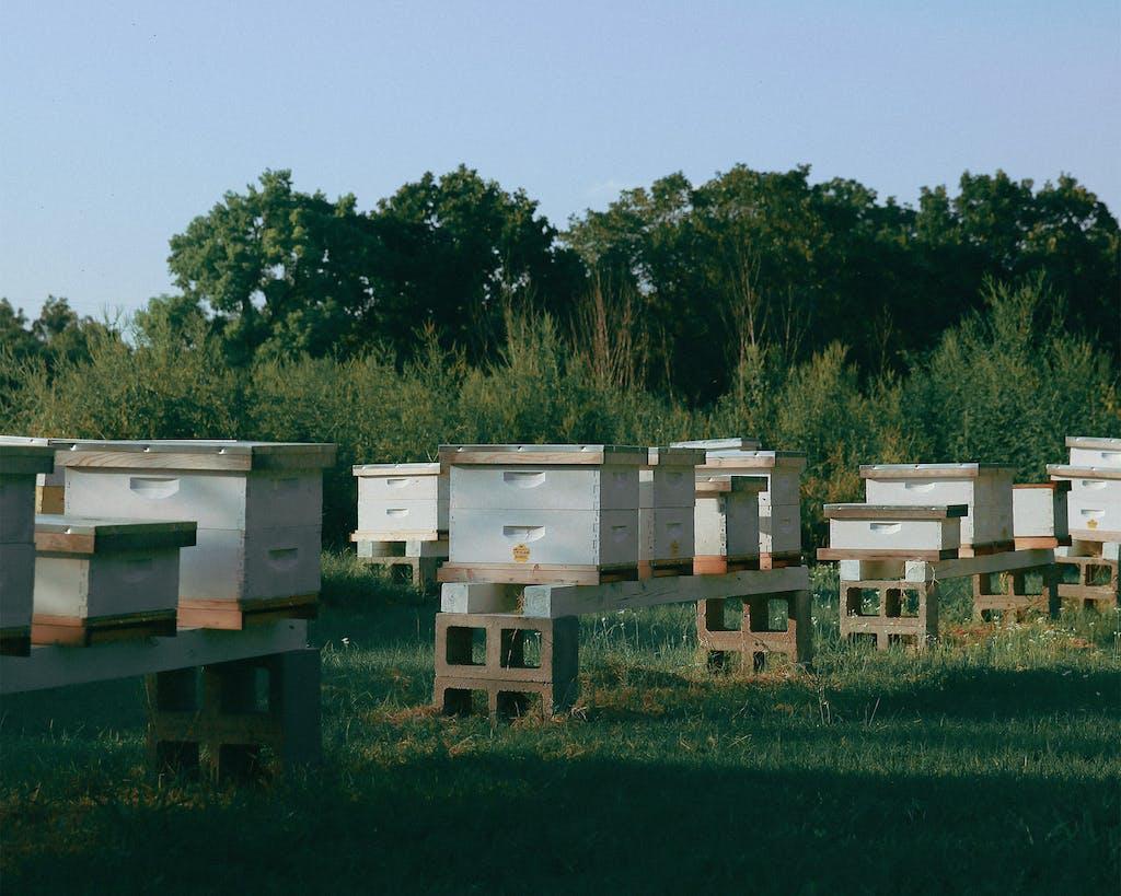 Thompson's backyard apiary in Elgin.