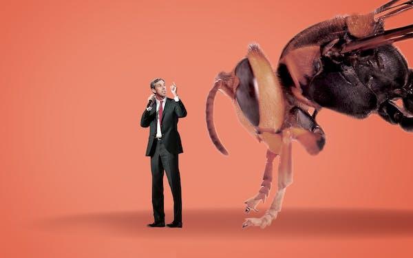 beto-orourke-hornets
